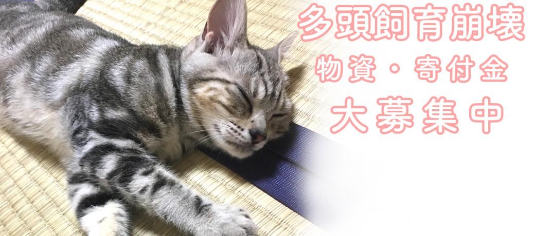 ■多頭飼育崩壊保護に向けて■