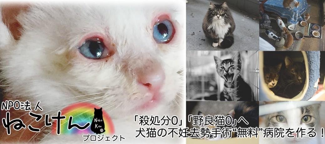 2016年8月10日 ねこけんプロジェクト始動!